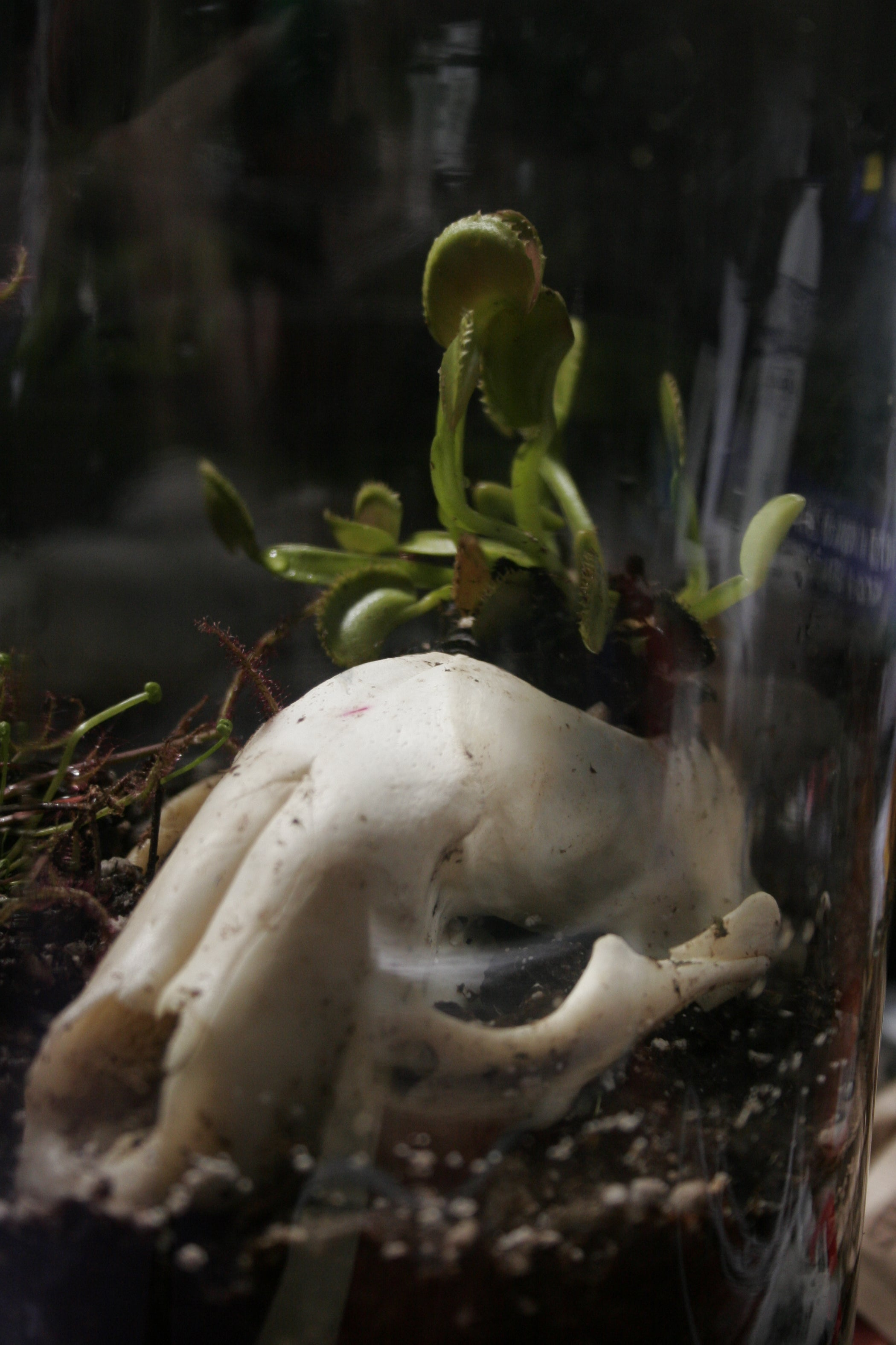 Carnivorous Plant Terrarium 7 Steps With Pictures Flytrap Robots Can Hunt And Catch Bugs For Meals