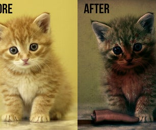 Bad Kitty Photo-Edit
