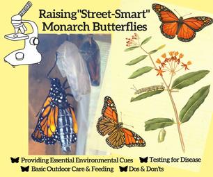 "How to Raise Healthy, ""Street-Smart"" Monarch Butterflies"