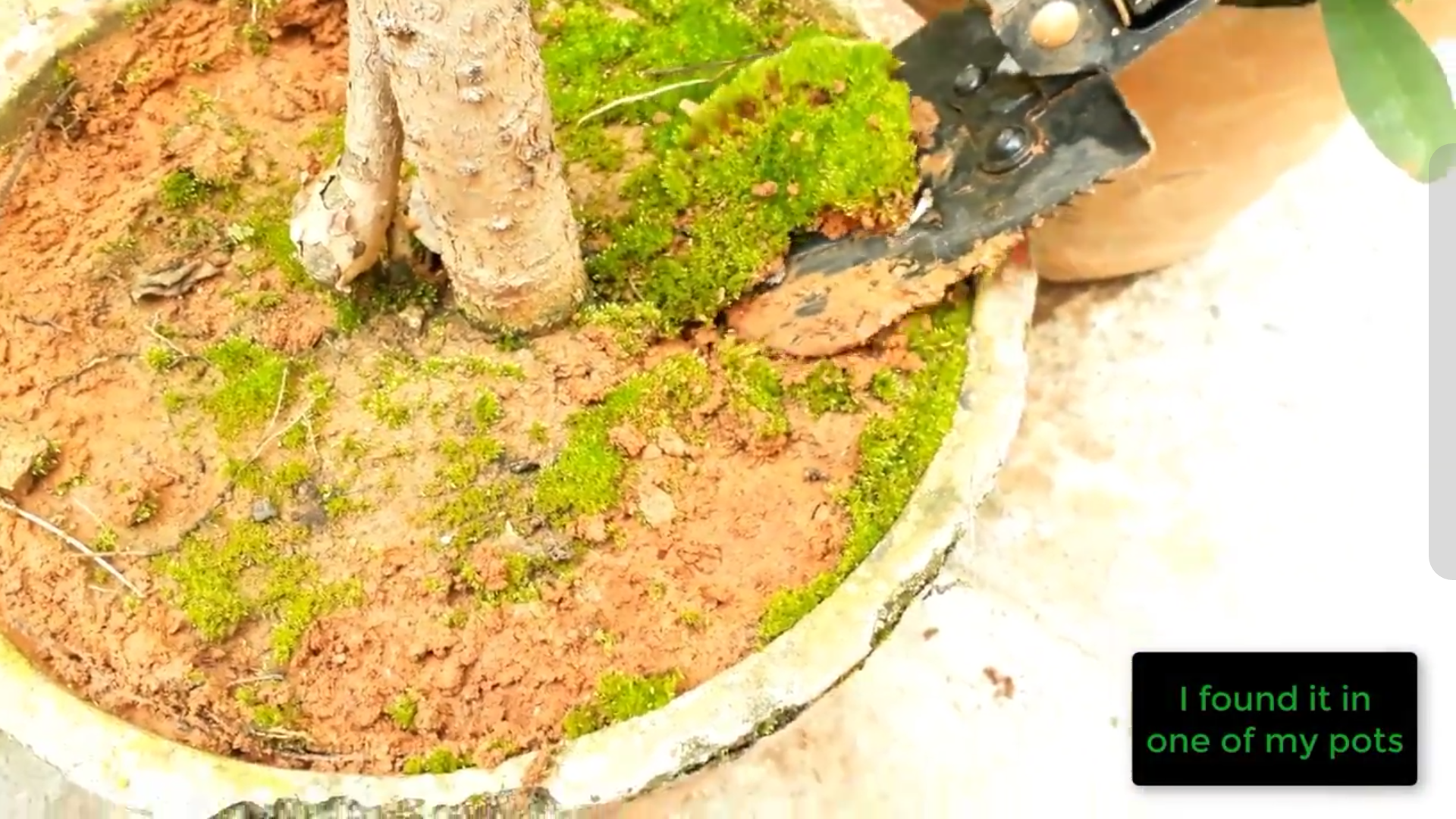 Picture of Gathering Moss