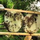 Beeswax Rendering