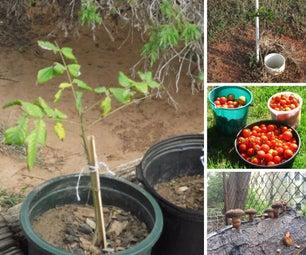 Gardening, Growing Food, Animal Management