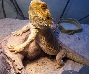 How to Make Salad for Bearded Dragons