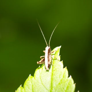 Reversed-Lens & Cellphone Macro Photography….Amazing Macro Pictures on the Cheap!