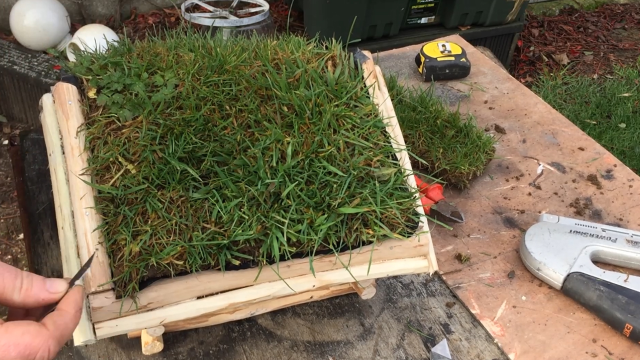 Picture of  Grass Sod.