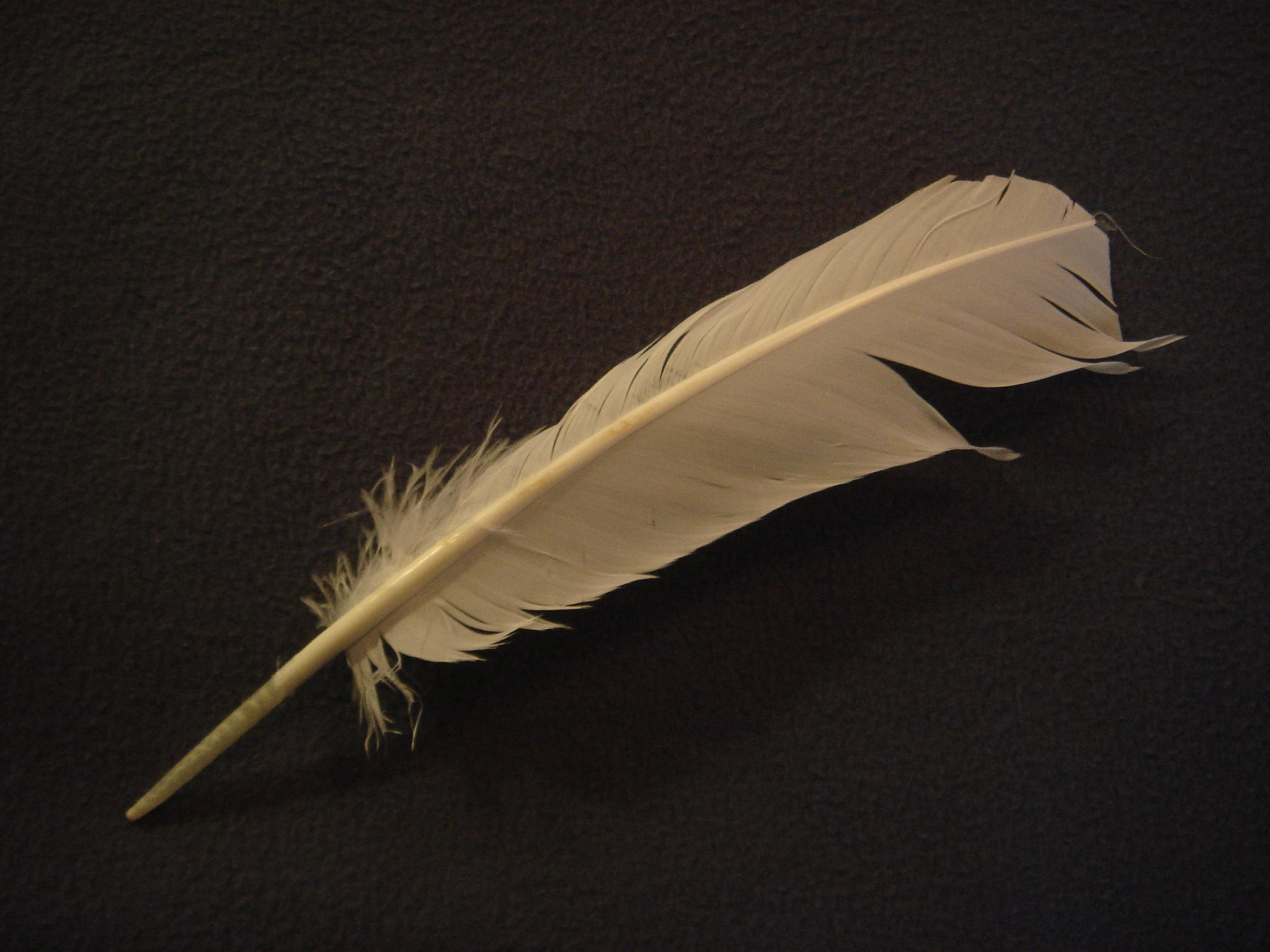 Picture of Feathers
