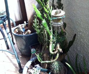 Balcony Small Plant Organizing Idea