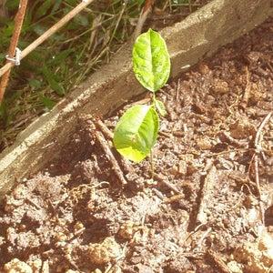 Plant Your Vines