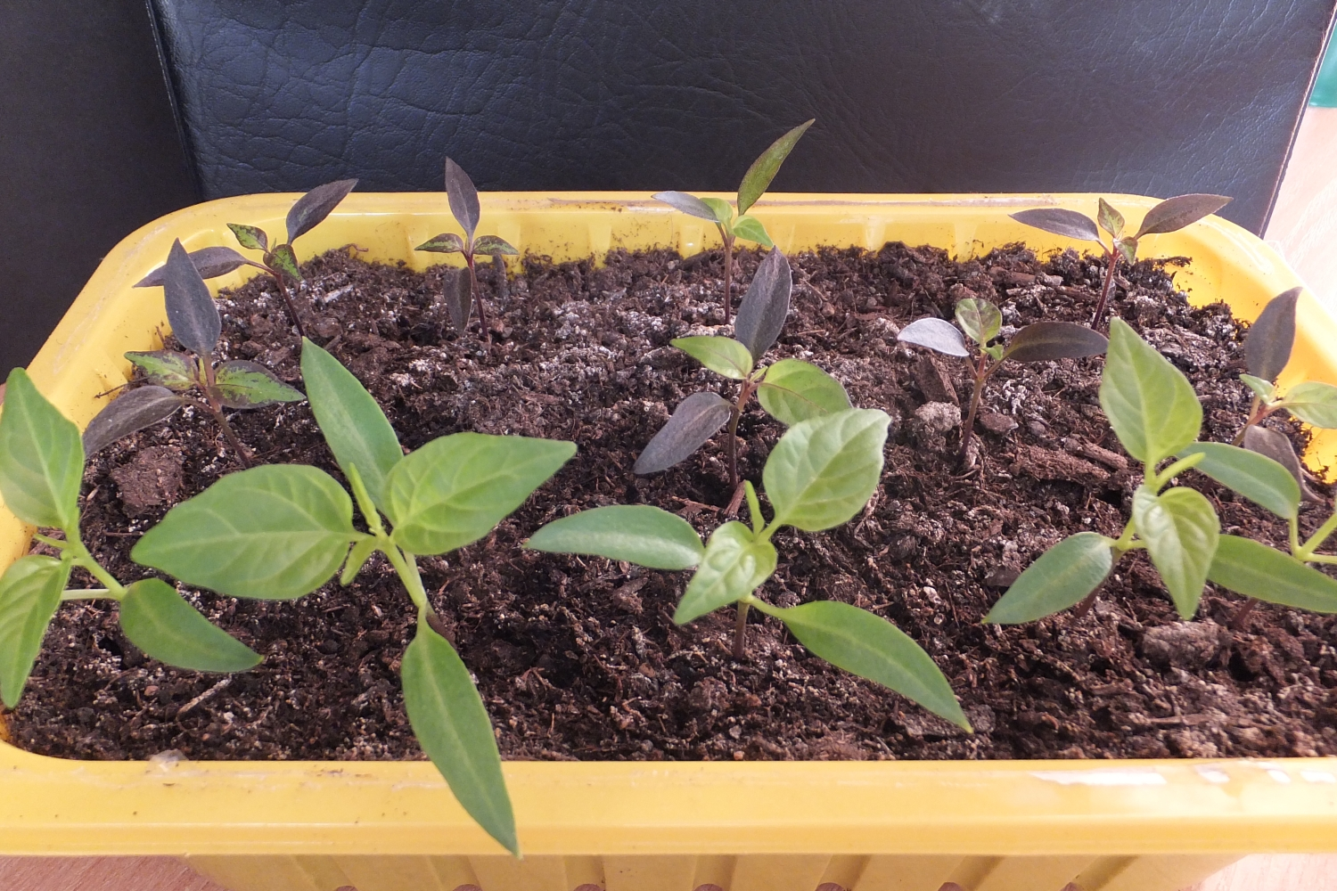 Picture of Start Seeds Indoors