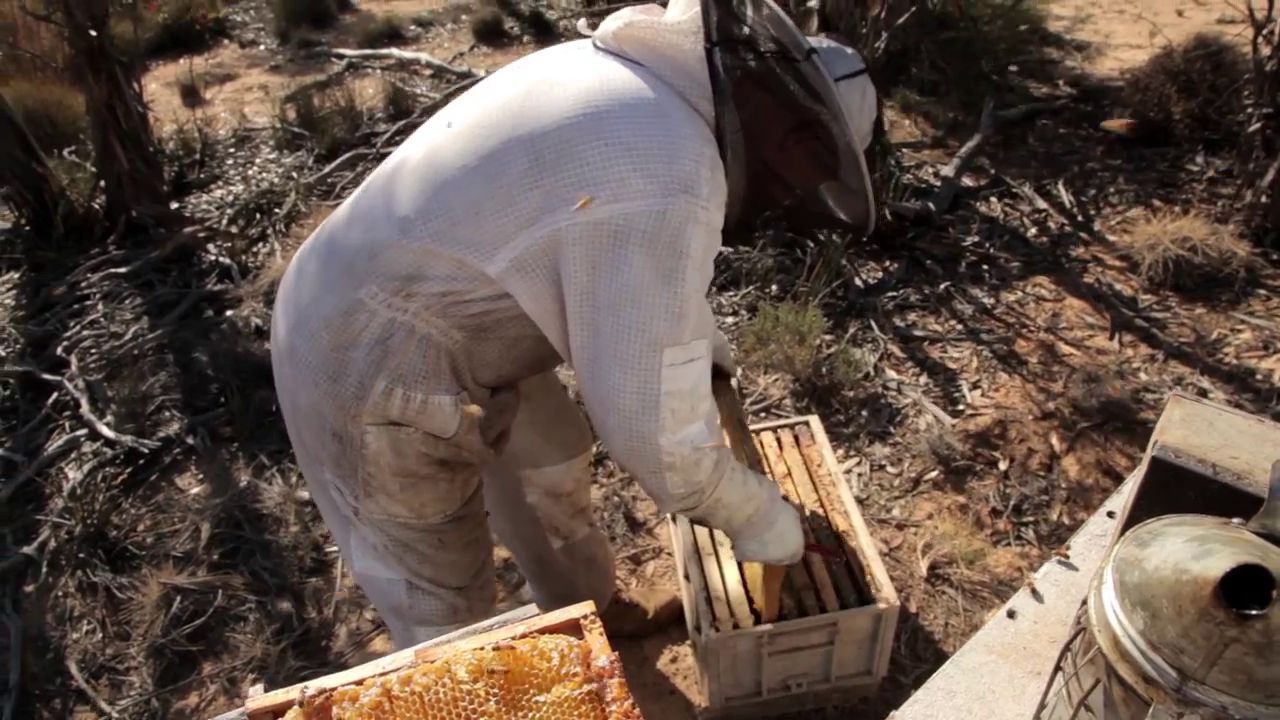 Picture of This Frame Is Full of Honey and Ready to Be Collected.