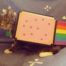 Nyan Cat- Pet Costume