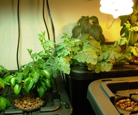 How to Build a Home Hydroponics System
