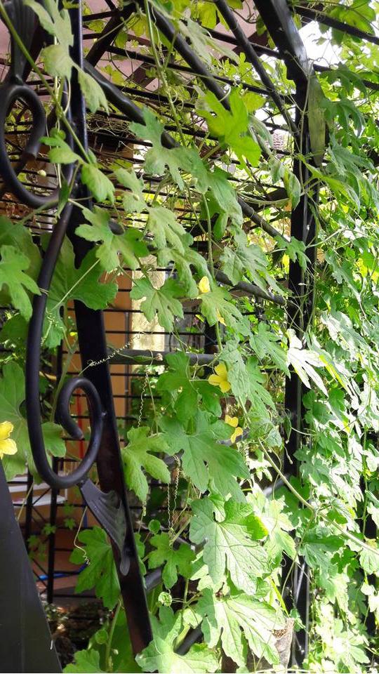 Picture of Repurpose Used Fences As Garden Trellis
