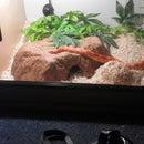 Corn Snake Habitat.