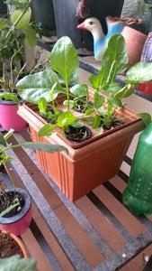 Invert the Planter for Hydroponics