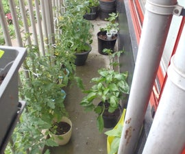 """Grow a """"tiny"""" balcony food garden!"""