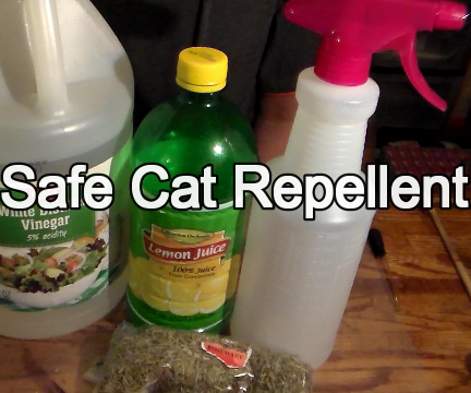 Friendly but Effective Cat Repellent All