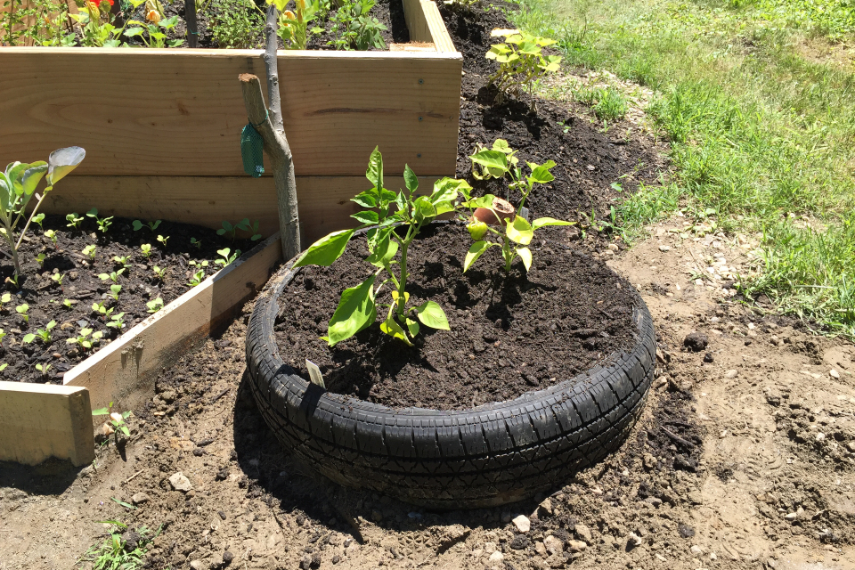 Picture of Add Soil and Plants