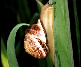 Snails in the Garden