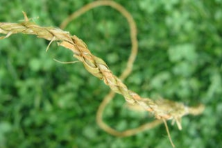 Natural Cordage : 7 Steps (with Pictures) - Instructables