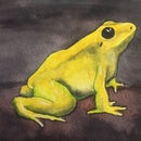 How to Paint a Yellow Frog