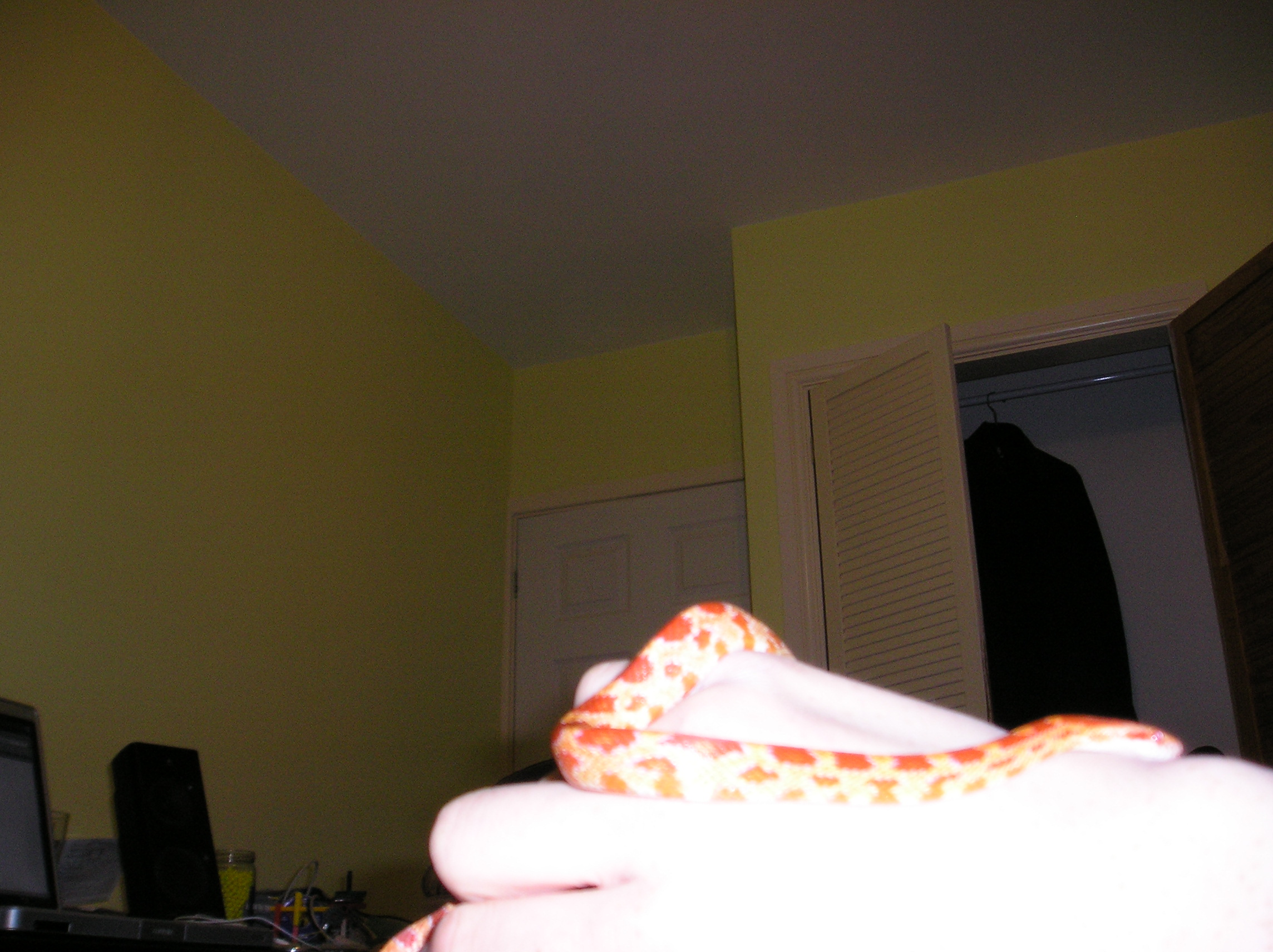Picture of Your First Pet Snake.