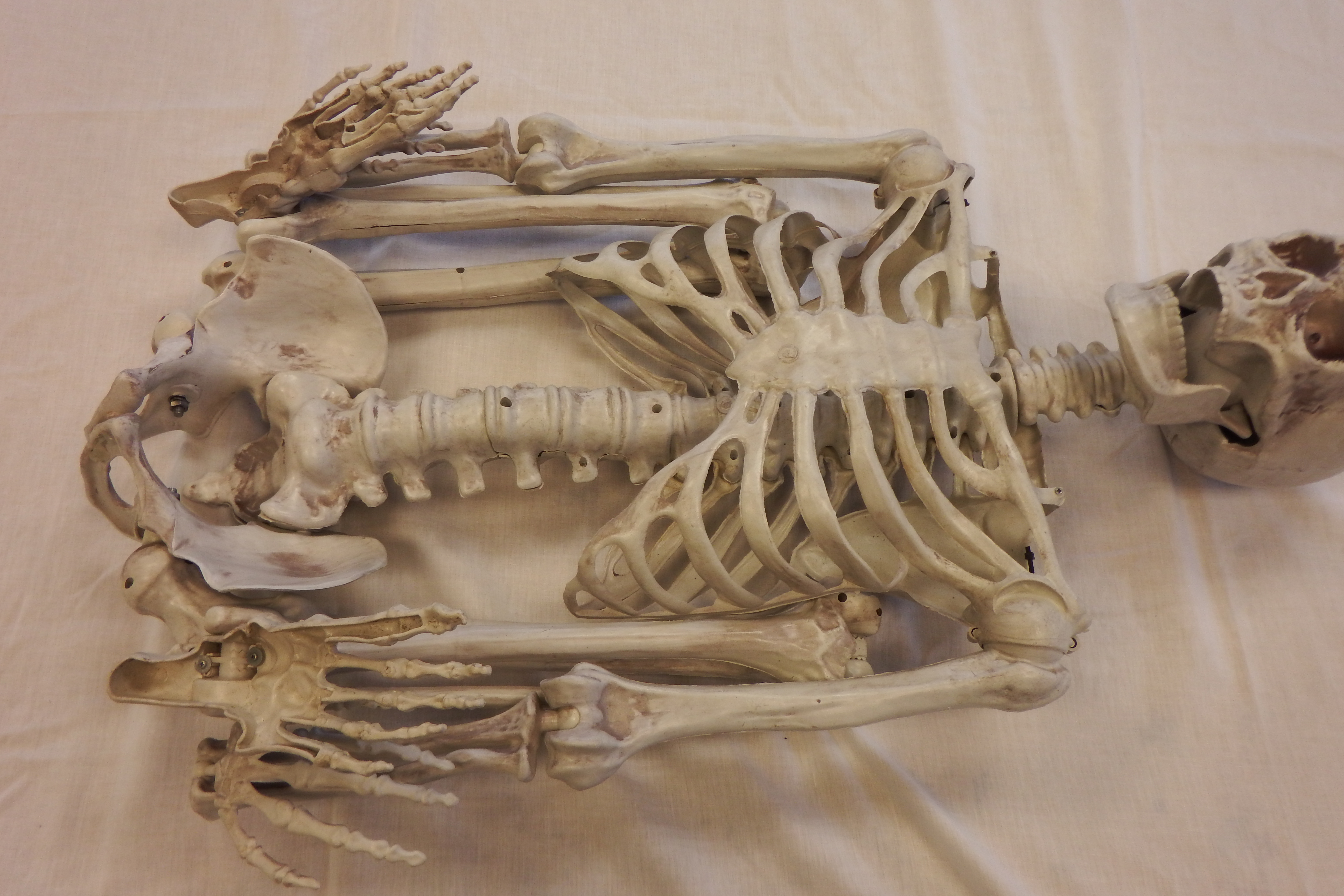 Picture of Skeleton in Your Closet, Literally.