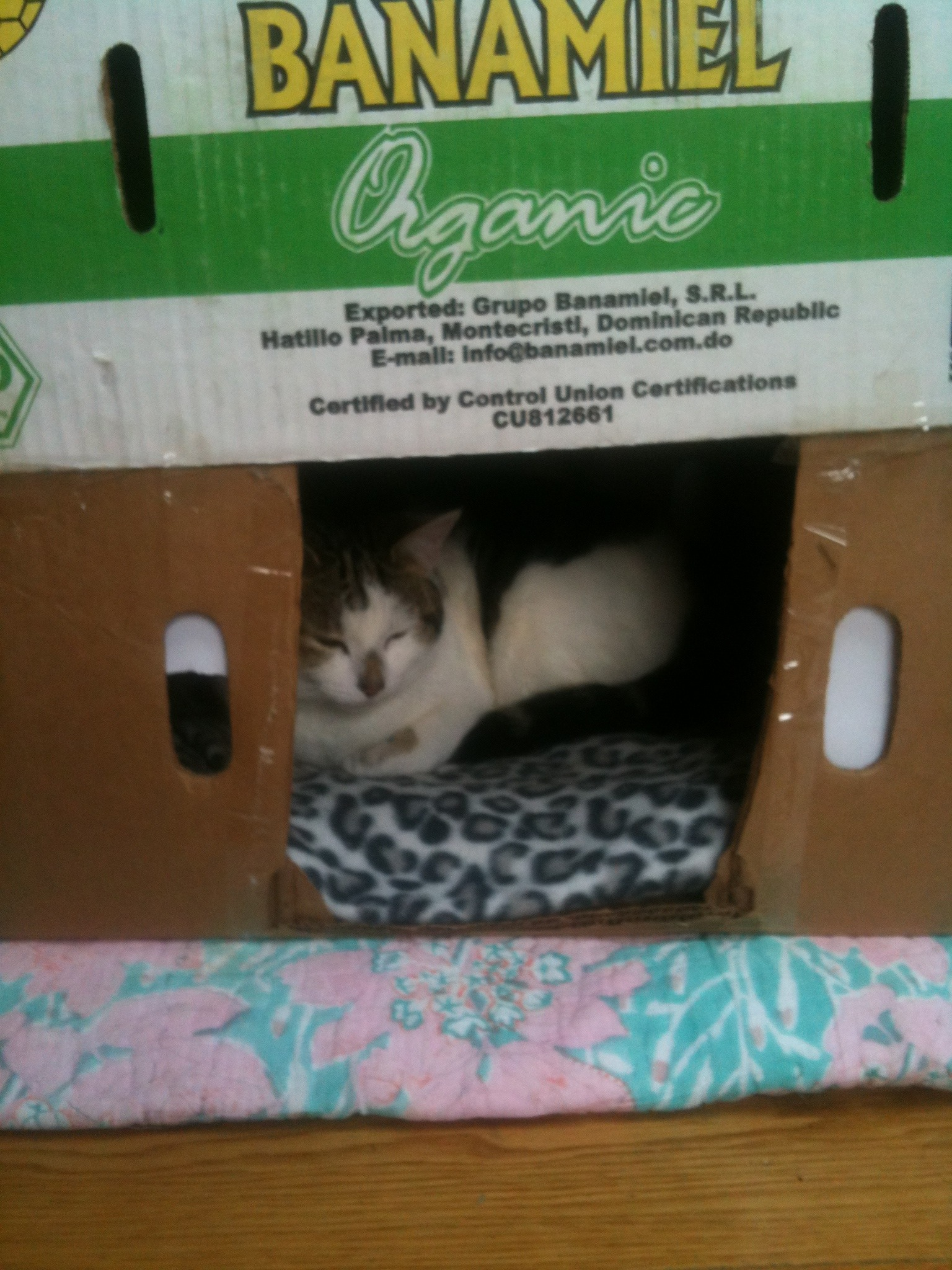 Picture of How to Make a Cat House