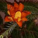 Evergreen Orange Flower