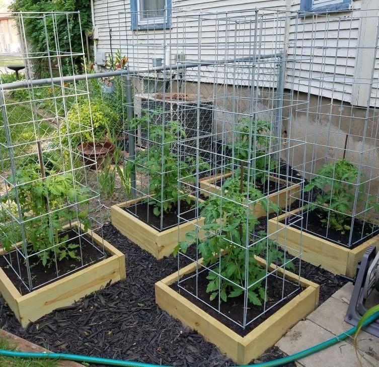 Build The Best Tomato Cages Ever 5 Steps With Pictures