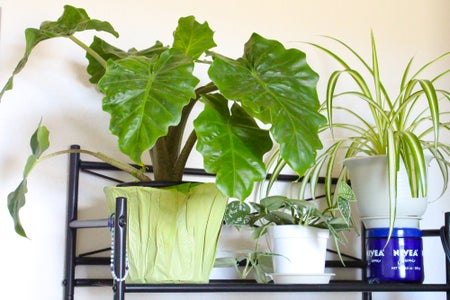 Keep Your Plants in the Bathroom