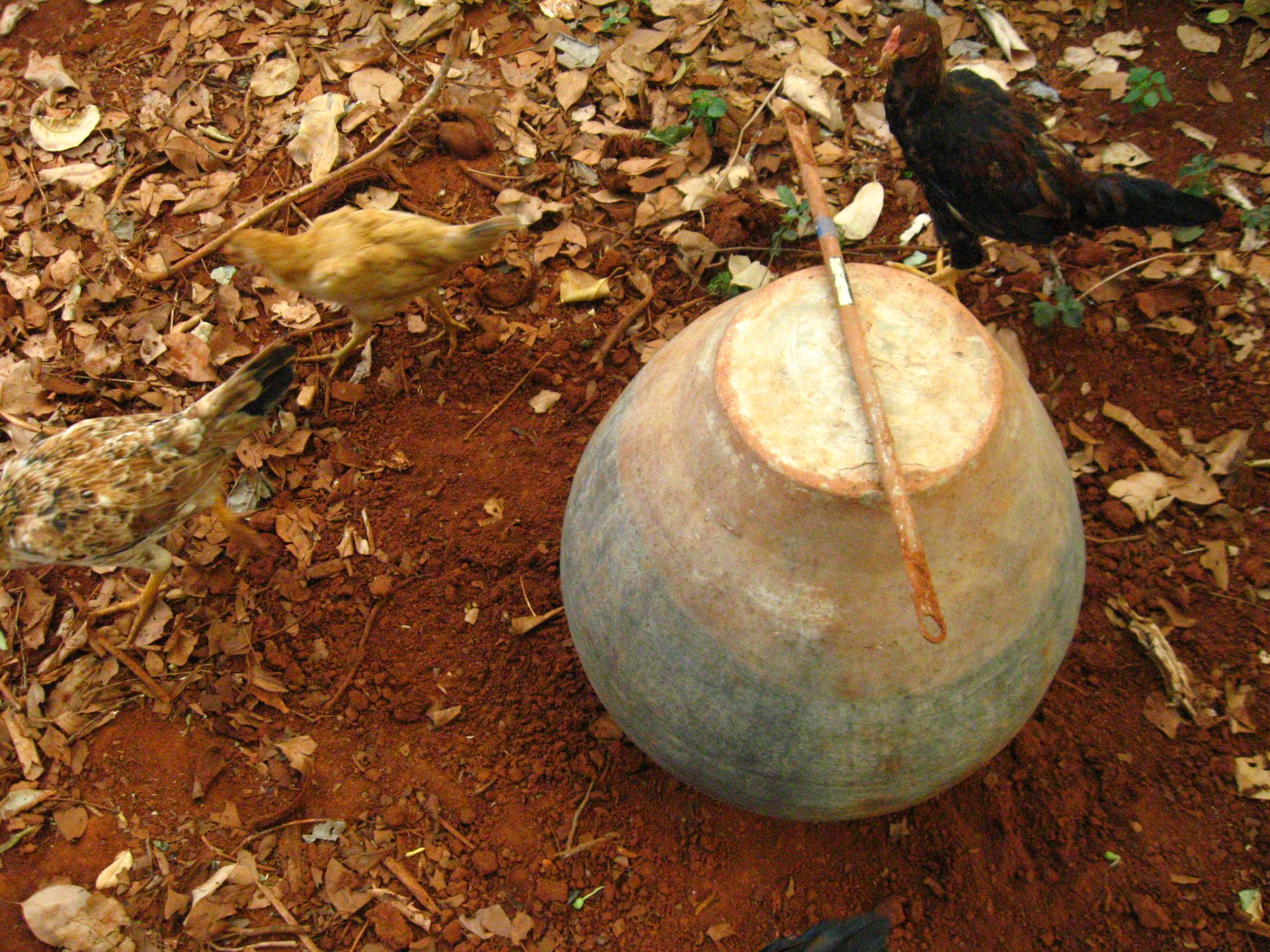 Picture of Fill the Pot With Organic Waste