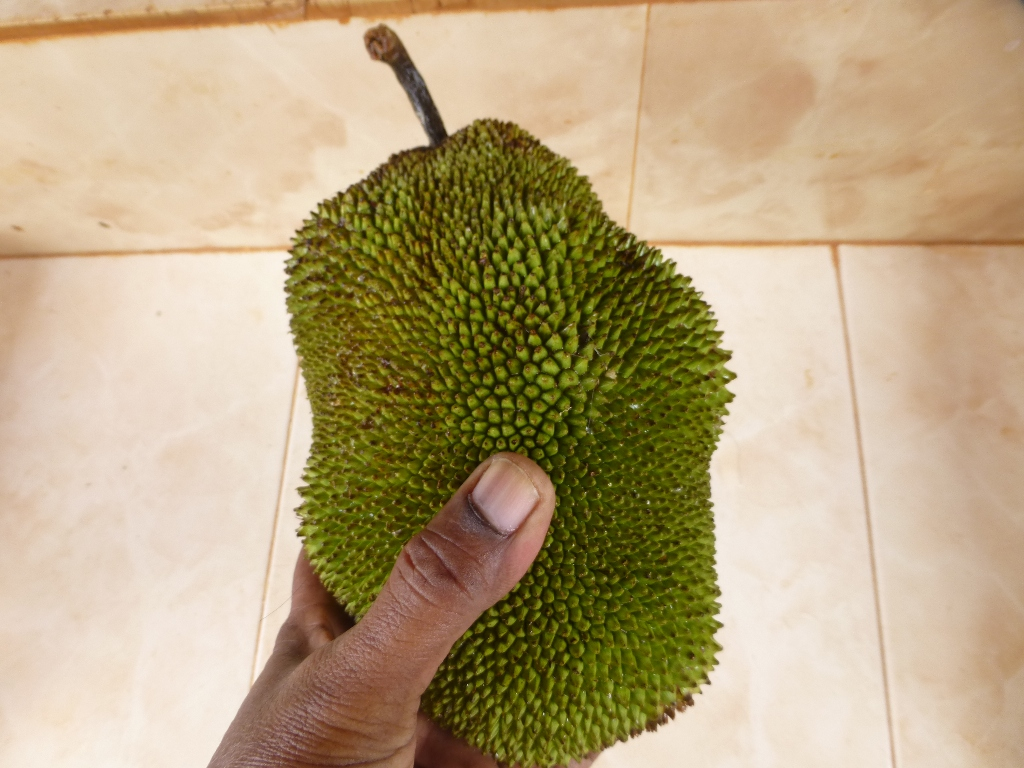 Picture of Harvest or Buy a Raw Jackfruit