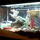 How To Make A Hermit Crab Habitat