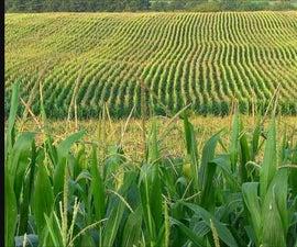 a Green Alternative Fertiliser From Urine