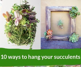 10 Ways to Hang Your Succulents