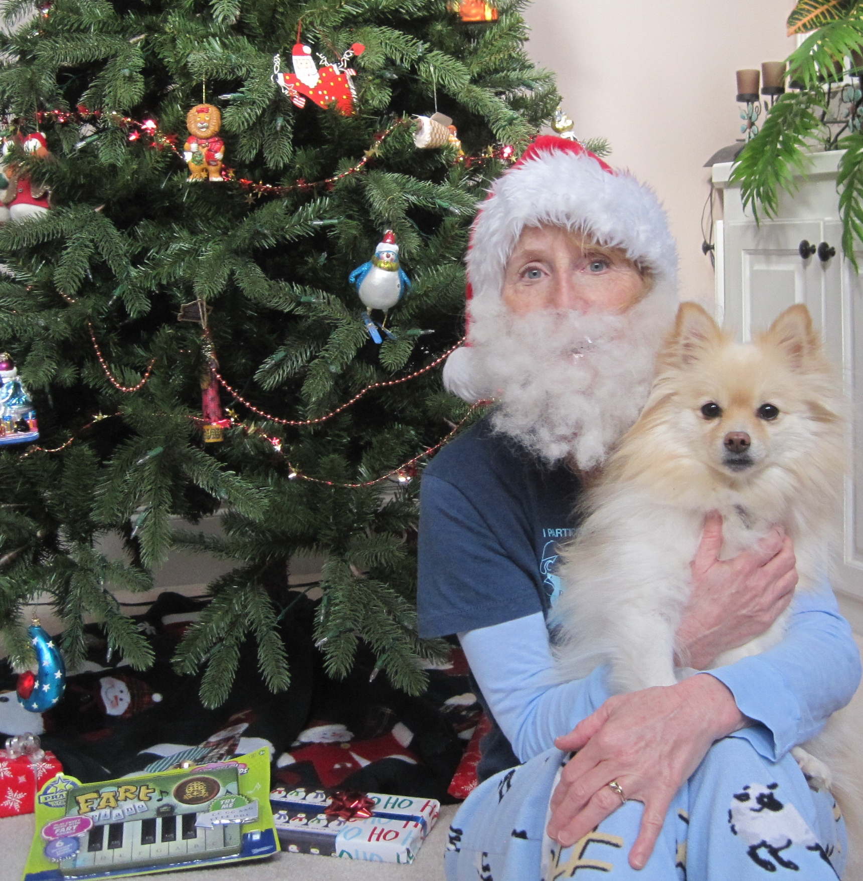 Picture of How to Make a Santa Beard From Dog Hair