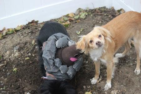 Diglett Dog Costume