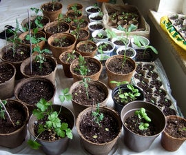 Seed Starting: a Comparative Study on Cheap Indoor Methods