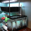 "Easy ""Shelf"" Aquaponics with Bell Siphon"