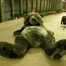 Gigantic Teddy Bear