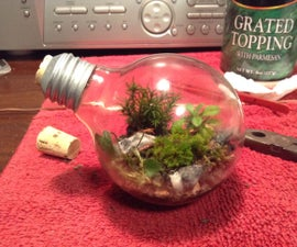 How to Make a Light Bulb Terrarium