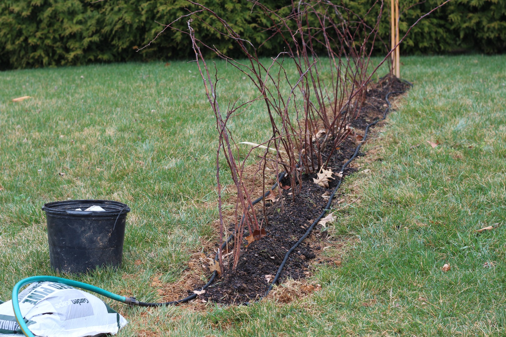 Picture of Add Raspberry Plants