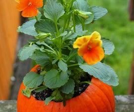 Flower Pot Pumpkins