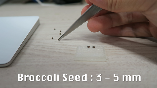 Measure the Size of the Seeds