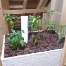 Complete Indoor Aquaponics - Start to Finish