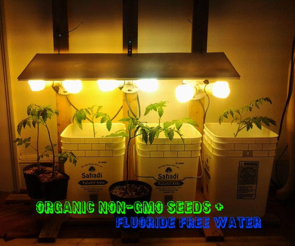 Indoor Tomato Grower