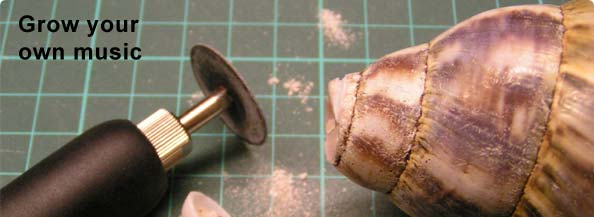 Picture of Grow Your Own Musical Instrument - an Environmentally-sustainable Conch-substitute.