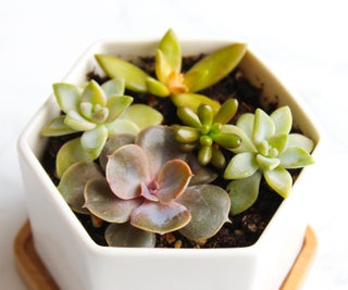 How to Take & Grow Succulents From Cuttings