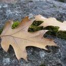 Fall Photo Shooting Tips!